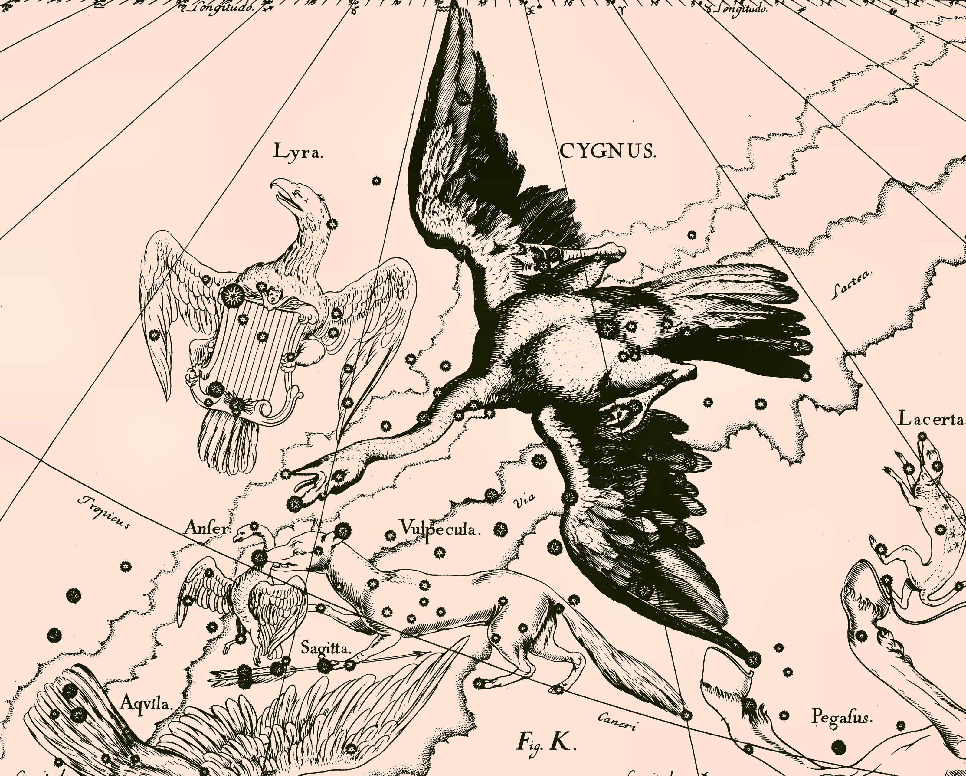 http://www.galactic.name/constellations/img/cygnus_constellation_uranographia_big.jpg